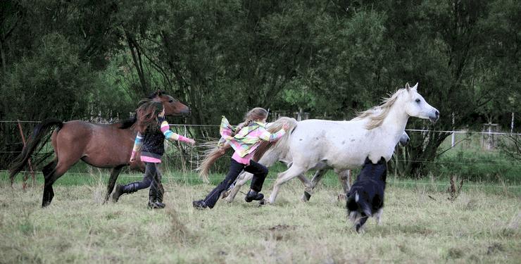 Kreativität und Tierliebe Geschenke für 10-jährige Mädchen